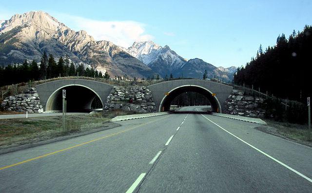 Trans Canada wildlife overpass